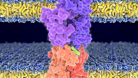 Finding neoantigens faster — advances in the study of the immunopeptidome
