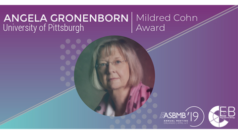 Gronenborn honored for advances in NMR spectroscopy