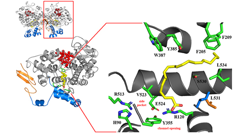 A new hotspot for cyclooxygenase inhibition