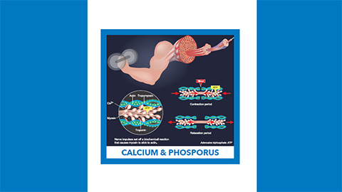 For May, it's in your bones: calcium and phosphorus