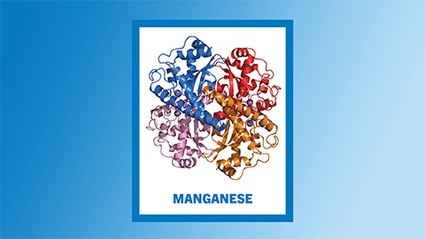Manganese seldom travels alone