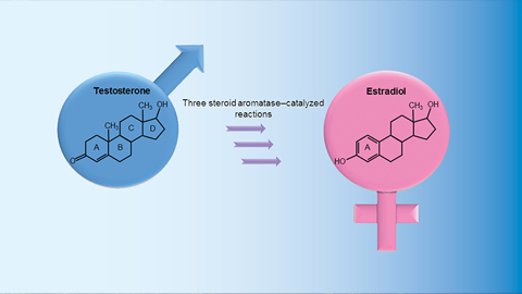 JBC: On the trail of steroid aromatase