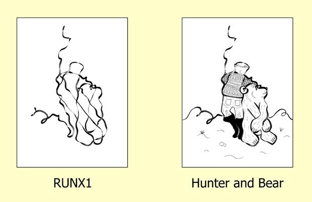 RUNX1