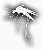 mosquito silhouette in white