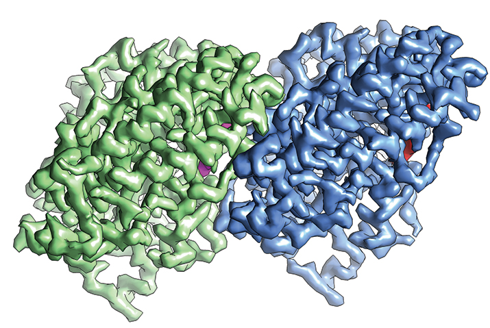 The structure α-tubulin (green) and β-tubulin (blue) determined by cryo-EM