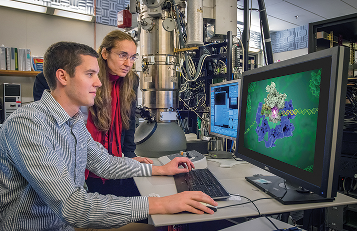 Eva Nogales and Robert Louder review a structure by cryo-EM.