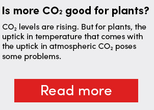 Is more CO2 good for plants?
