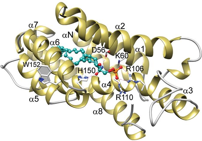 CPTP/16:0-C1P complex