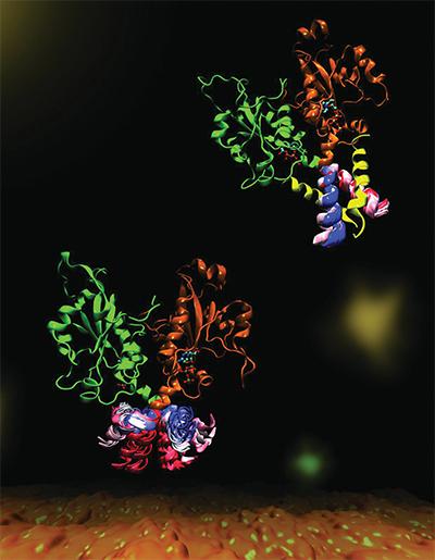Phospholipidsynthesis