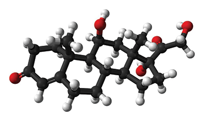 Ball-and-stick model represents a molecule of cortisol