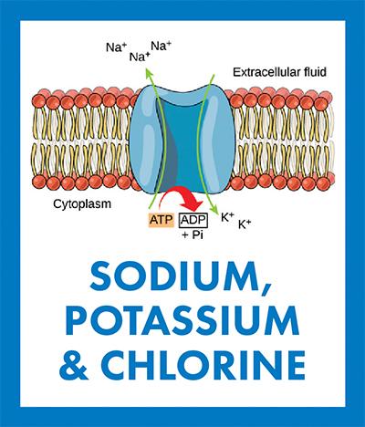 Sodium-Potassium-Chlorine