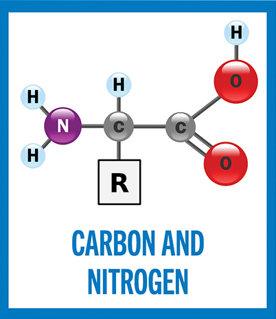Carbon and Nitrogen