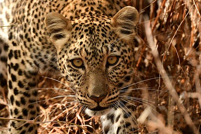 Tanzania 8