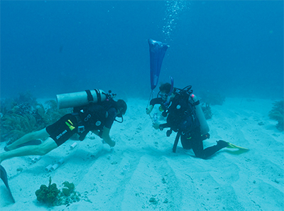 Paul Jensen and graduate student Nastassia Patin collect sediment samples in 2014 at the Smithsonian field station in Carrie Bow Cay, Belize.